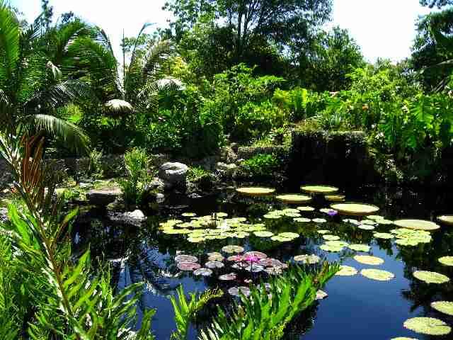 My Scent Memory: Fairchild Botanical Gardens 1969  Anyau0027s Garden Fairchild