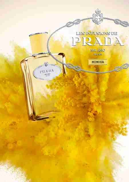 Perfume Review Prada Hit New De Misses Among Mimosa Infusion SqzGUpVM