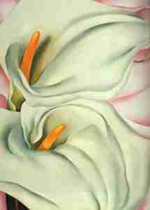 two-calla-lily-on-pink okeefe 1928
